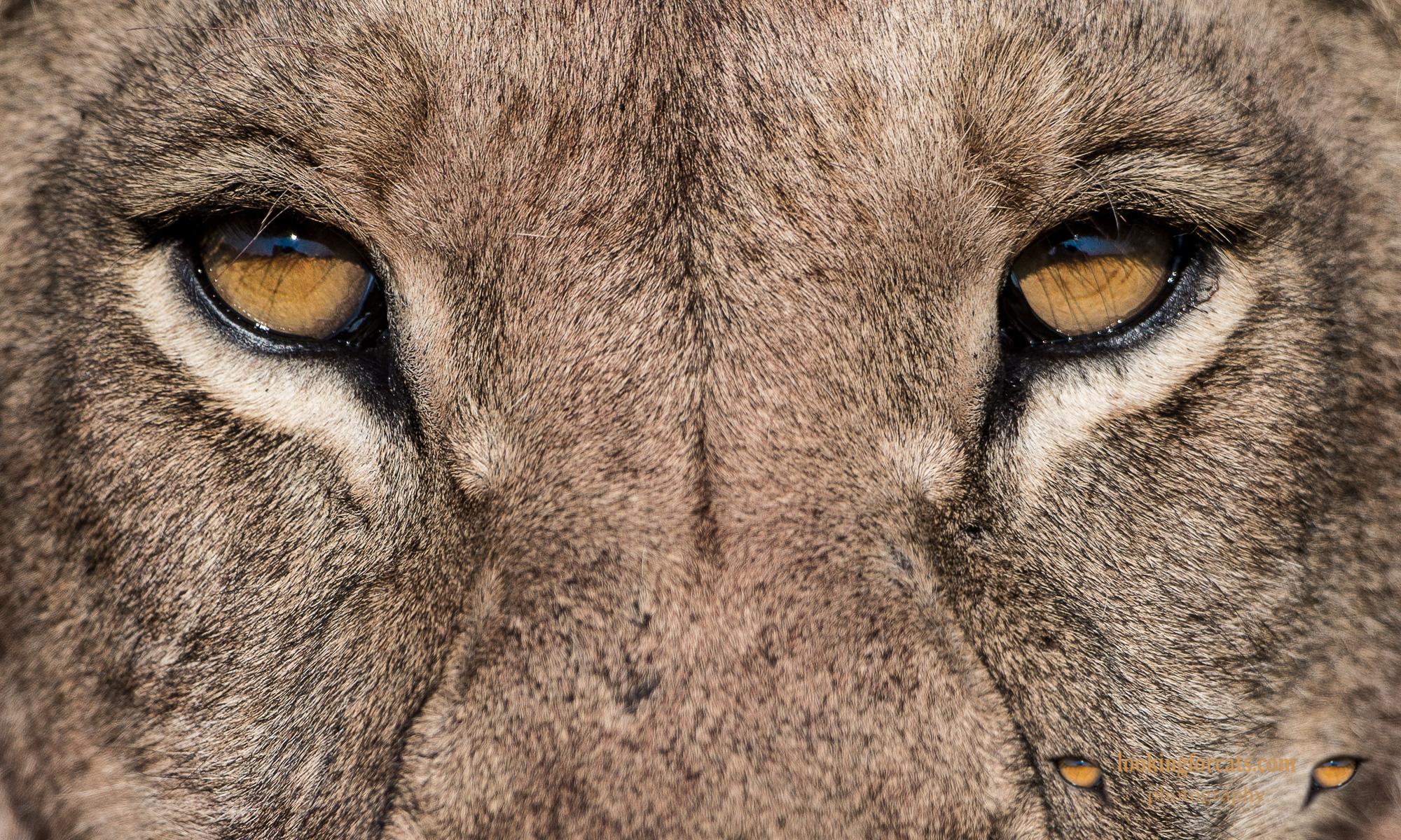 lookingforcats.com